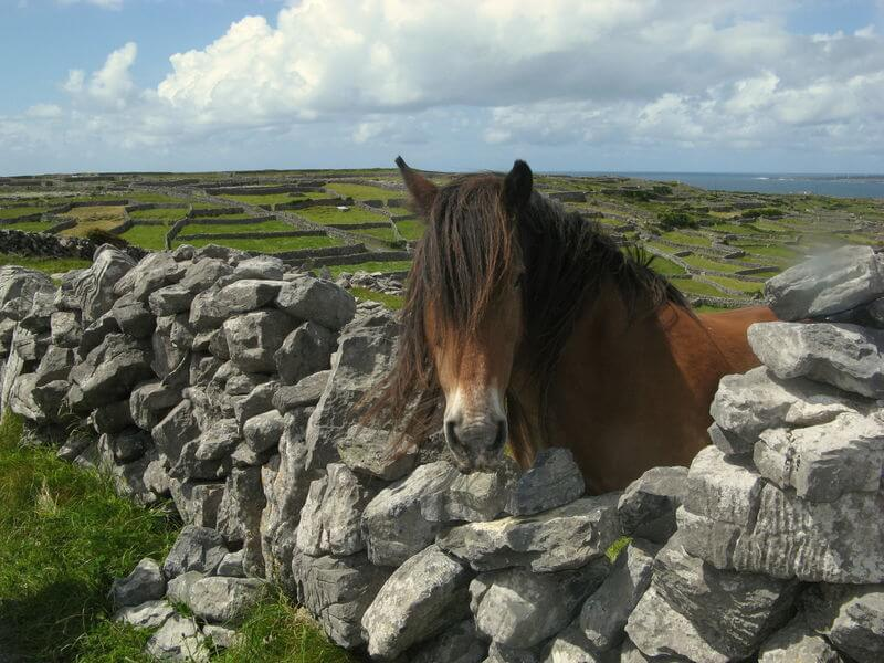 horse in kerry