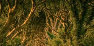 the dark hedges ireland