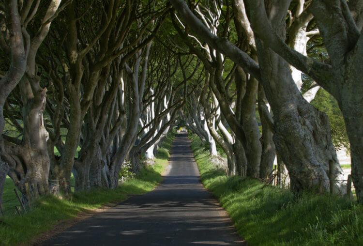 the dark hedges ireland