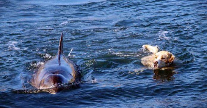 dougie dolphin tory island
