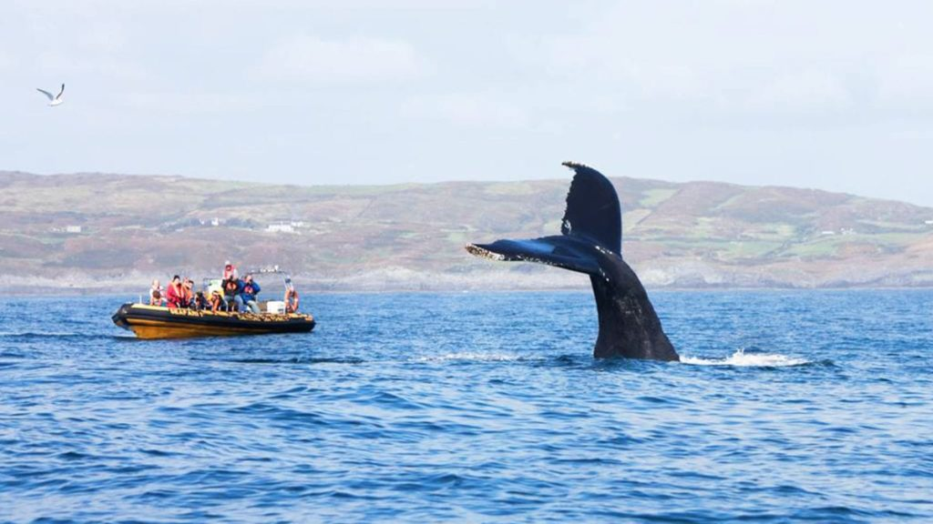 whale watching in west cork