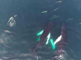 whales and dolphins west cork