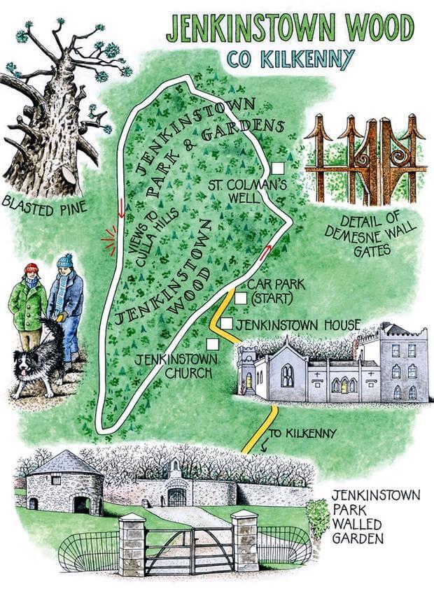 Jenkinstown Wood kilkenny