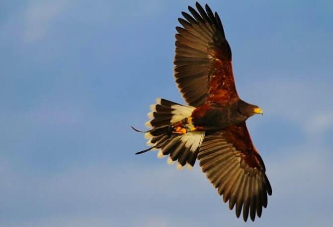 National Bird of Prey Centre wicklow