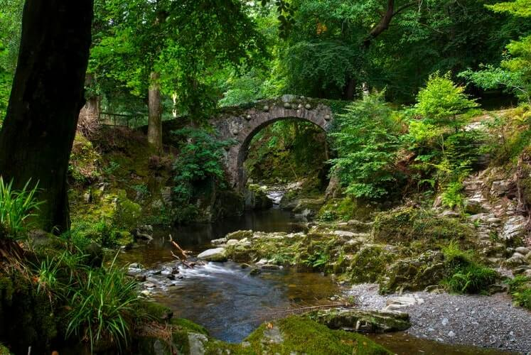 a bridge in Tollymore Forrest