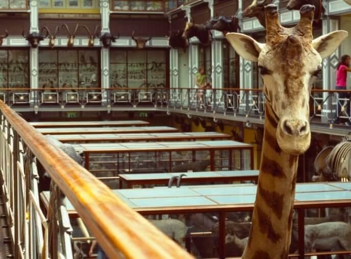 dead zoo dublin