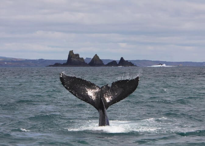 whale watching in cork