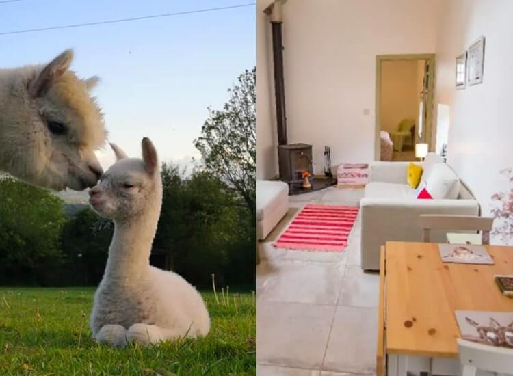 The Alpaca Airbnb