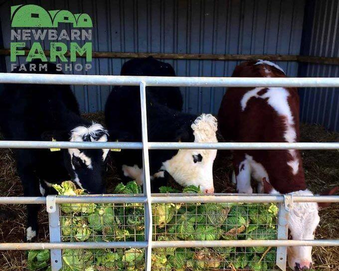 newbarn farm ashbourne