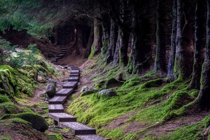 Ballinastoe woods walk