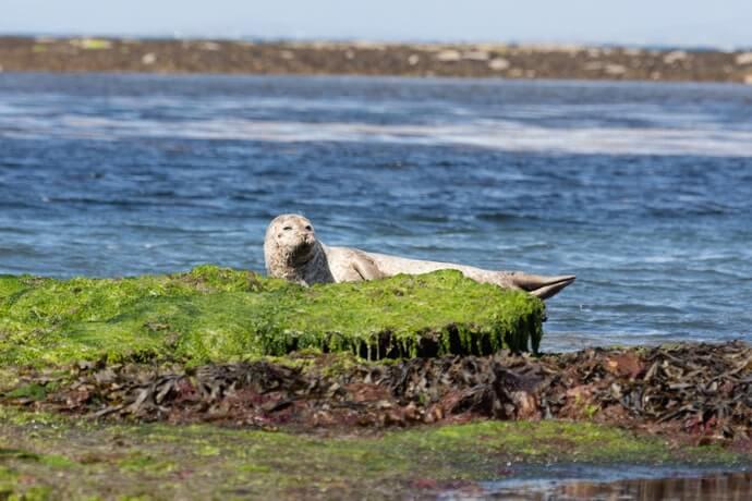 seals on the aran islands