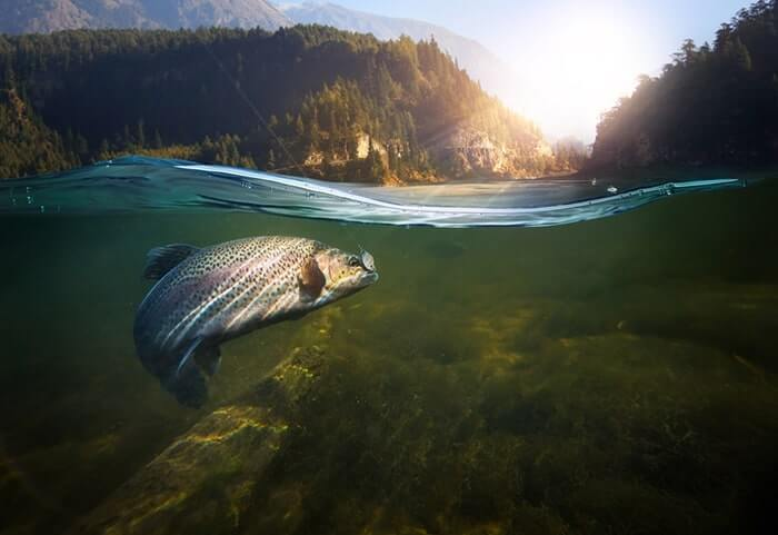 salmon of knowledge Irish myth
