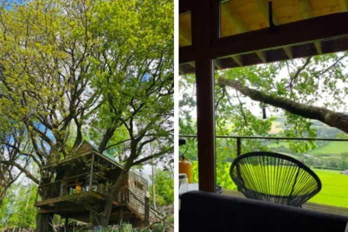 hilltop treehouse