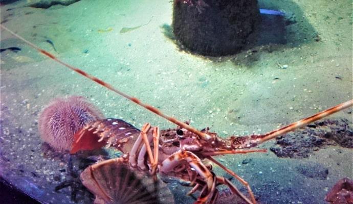 Photo of sea animal in Aquarium