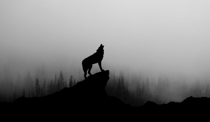 Man-Wolves of Ossory