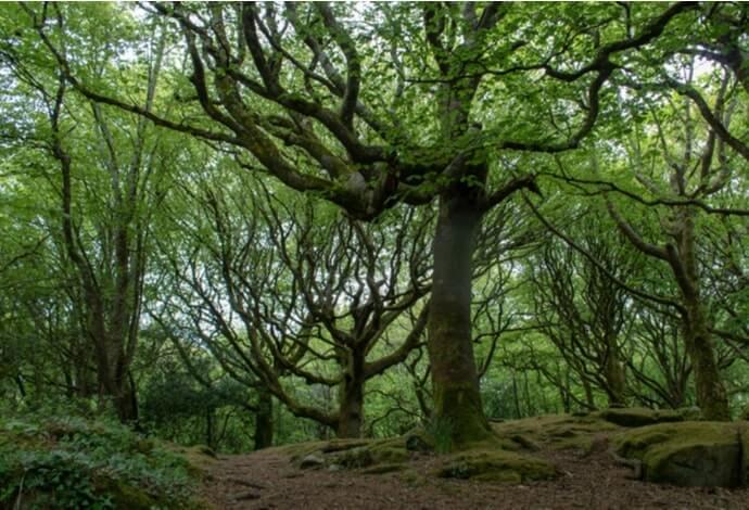 forest walks in galway