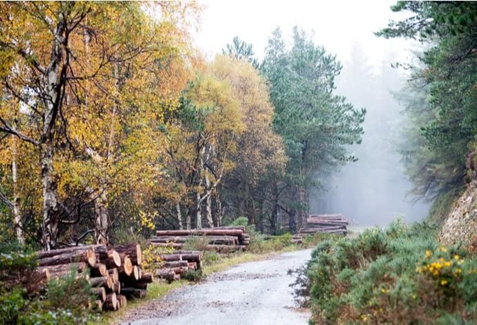 djouce woods walk