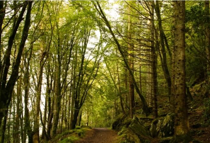 hazelwood forest lough gill