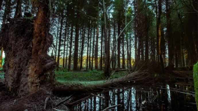 Belvoir forest