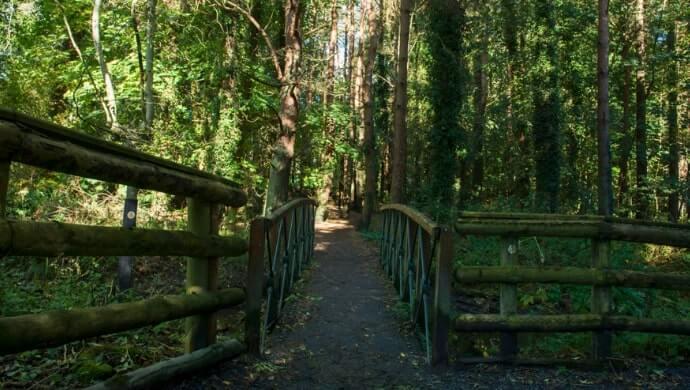 Stormont Woodland