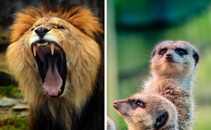 visiting belfast zoo