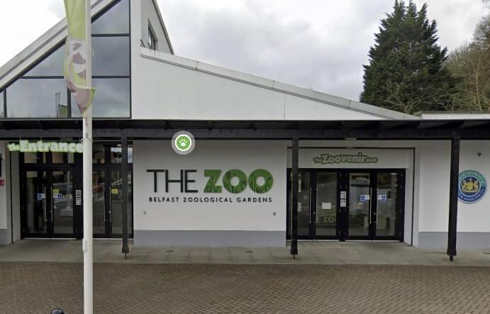 zoo in belfast