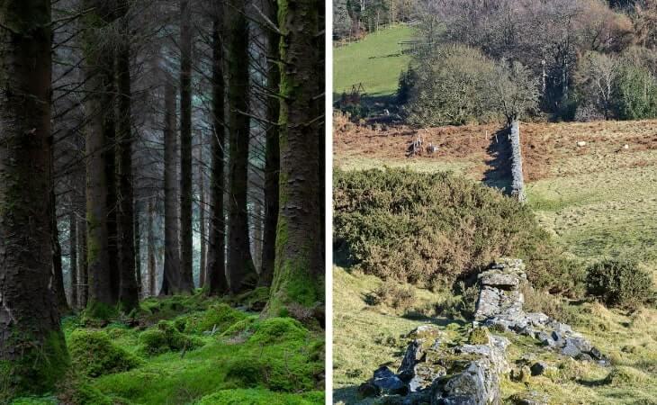 Cruagh Woods walk