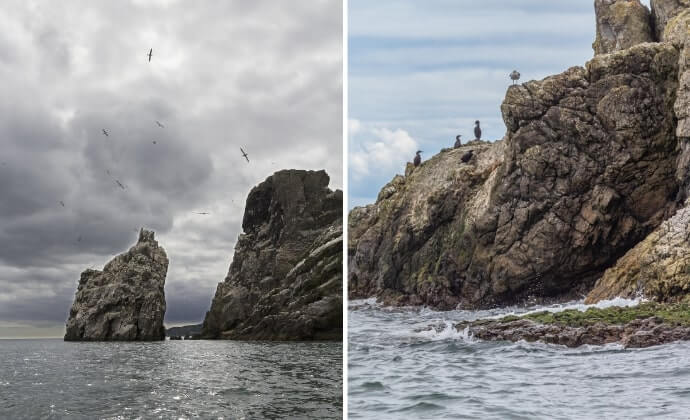 gannets on ireland's eye
