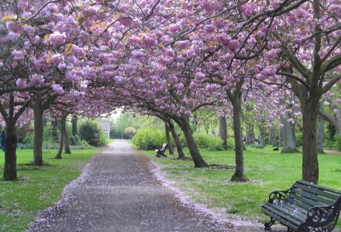walking in herbert park
