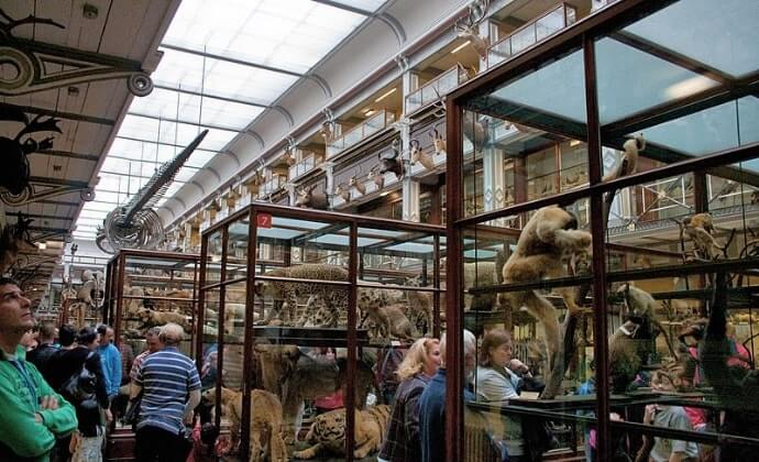 national history museum dublin