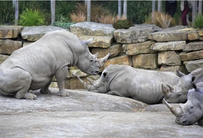animals at dublin zoo